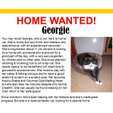 Meet Georgie looking for a home - #Epsom & Ewell Cats Protection @Epsom_CP #giveacatahome