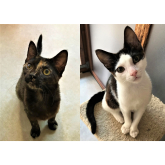 Meet Damson & Forest looking for a home - #Epsom & Ewell Cats Protection @Epsom_CP #giveacatahome