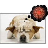 Take Care of Your Pets This Bonfire Night