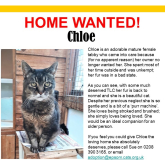 Meet Chloe looking for a home - #Epsom & Ewell Cats Protection @Epsom_CP #giveacatahome