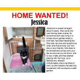 Meet Jessica looking for a home - #Epsom & Ewell Cats Protection @Epsom_CP #giveacatahome