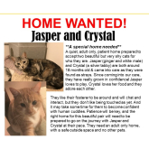 Meet Jasper & Crystal looking for a home - #Epsom & Ewell Cats Protection @Epsom_CP #giveacatahome