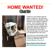 Meet Charlie looking for a home - #Epsom & Ewell Cats Protection @Epsom_CP #giveacatahome