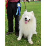 Fabulous Fun Family Day & Dog Show in Ryelands Park