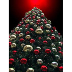Christmas information and the worlds tallest Christmas tree from The Christmas Decorators