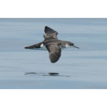 Lundy Seabirds Enjoy A New Home This Year
