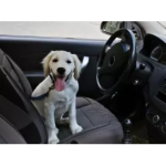 Dog friendly car ratings from McCarthy Cars!