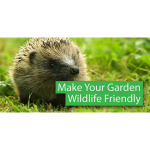 Attract Wildlife to your Garden this Spring