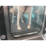 How Hydrotherapy Can Help Your Pet
