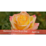 April 29th is National 'Peace' Rose Day