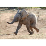 Thinking of going on Safari? Talk to safari specialists 2by2 Holidays of St Albans