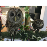 A Flying Start for Oscar's Nest in Barrow Market