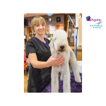 Ashgate Grooming & Kennels welcomes Gemma to the team!