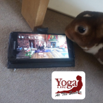 ZOOM to your online Yoga Classes in Eastbourne