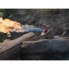 Paignton Zoo's fire-breathing dragon