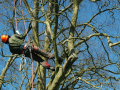 tree surgeon in abingdon