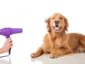 Dog Grooming in Walsall