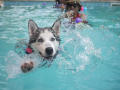 Recommended Canine Hydrotherapy in Walsall