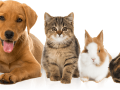 pet-services-walsall