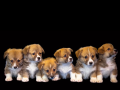 Recommended Canine Fertility Clinics in Walsall