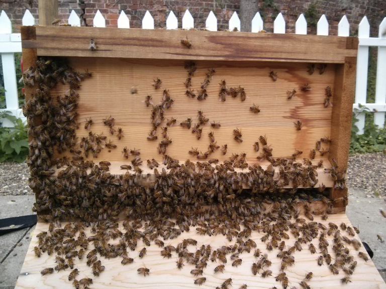 Beekeeping Taster Days