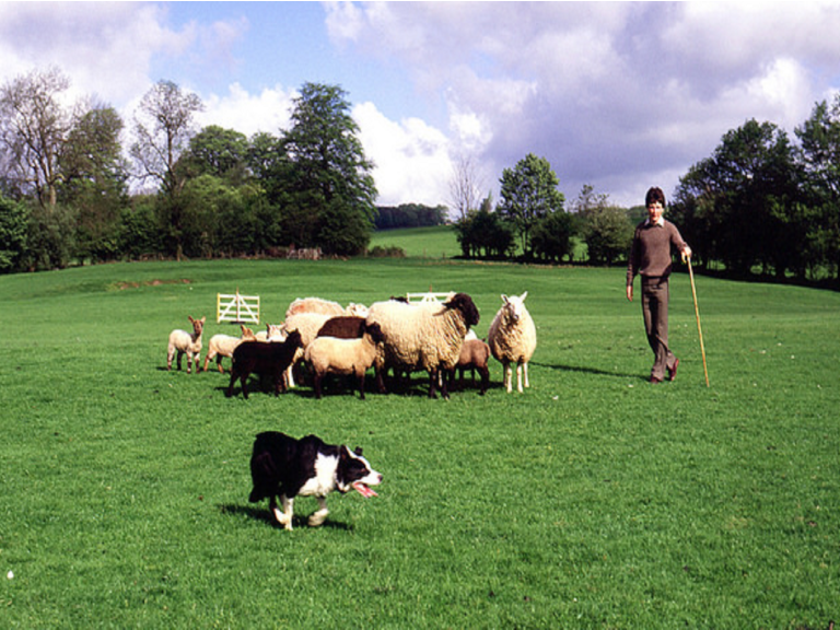 Sheepdog Trials and Llanllwni Show