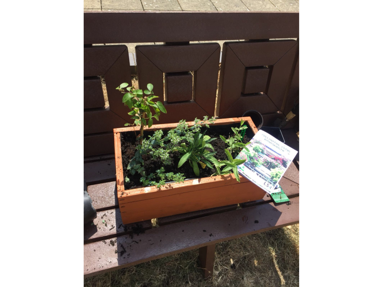 FREE Doddington and Rollo Community Roof Gardens distribution event
