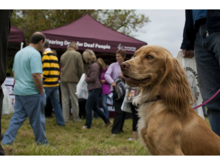 Baggeridge Family Fun Dog Show