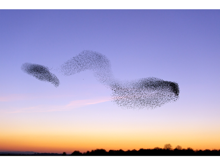 Soup and Starlings