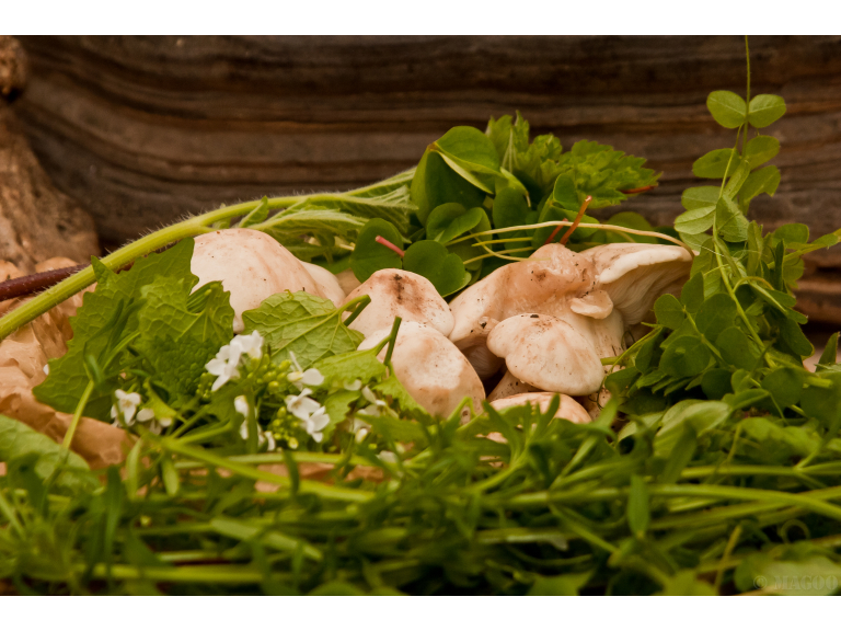 Peak District Foraging Courses