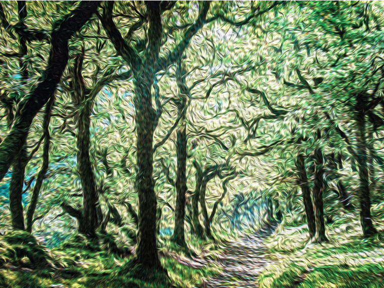 ART EXHIBITION:THE ARBOREALISTS