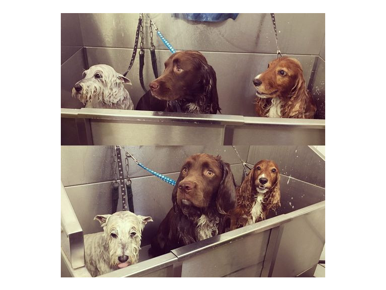 Job Vacancy! - For An Experienced Dog Groomer