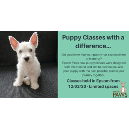 New puppy Classes in #Epsom with Epsom Paws