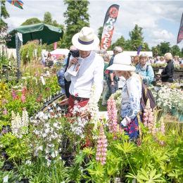 Blenheim Palace Flower Show – 2020