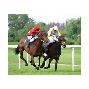 National Hunt Racing at Taunton Racecourse