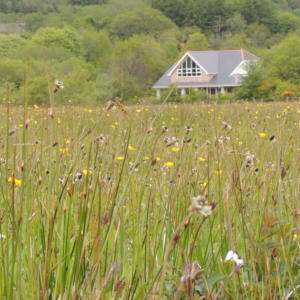 Introduction to Grasses, Rushes and Sedges