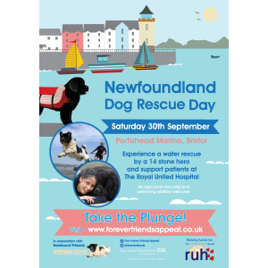 Newfoundland Dog Rescue Day