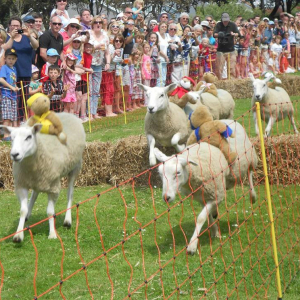 SARK SHEEP RACING & CARNIVAL