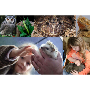 Teaching Talons Holiday Club - Amazing Animals