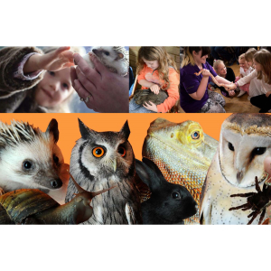 Teaching Talons Holiday Club - Discover Dinosaurs