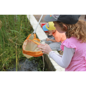 Pond Dipping and Design - Outdoor Kids' Activity