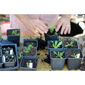 Introduction to Gardening - evening course