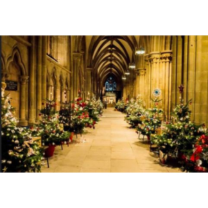 Christmas Tree Festival - Lichfield Cathedral