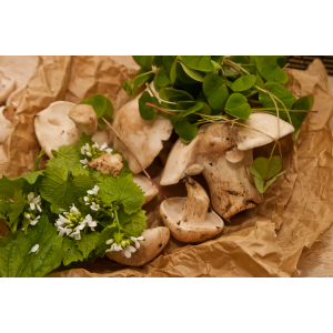 Spring Foraging Courses
