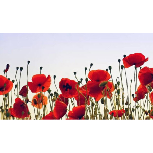 CHILDREN'S POPPY CHALLENGE