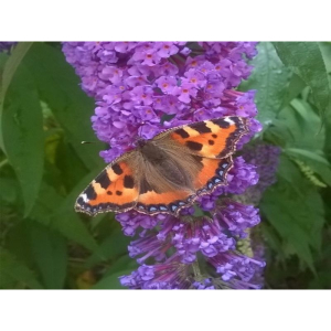 Spring Wildlife Talk, Butterflies, Forty Hall, Enfield, London, insects, nature
