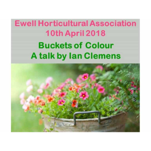 Buckets of Colour' talk with #Ewell Horticultural Association  #Loveyourgarden