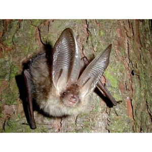 After Dark Bat Walk on #Epsom Common Local Nature Reserve