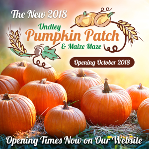 Undley Pumpkin Patch & Maize Maze
