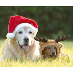 Christmas Organised Group Dog Walk at Knighton Park